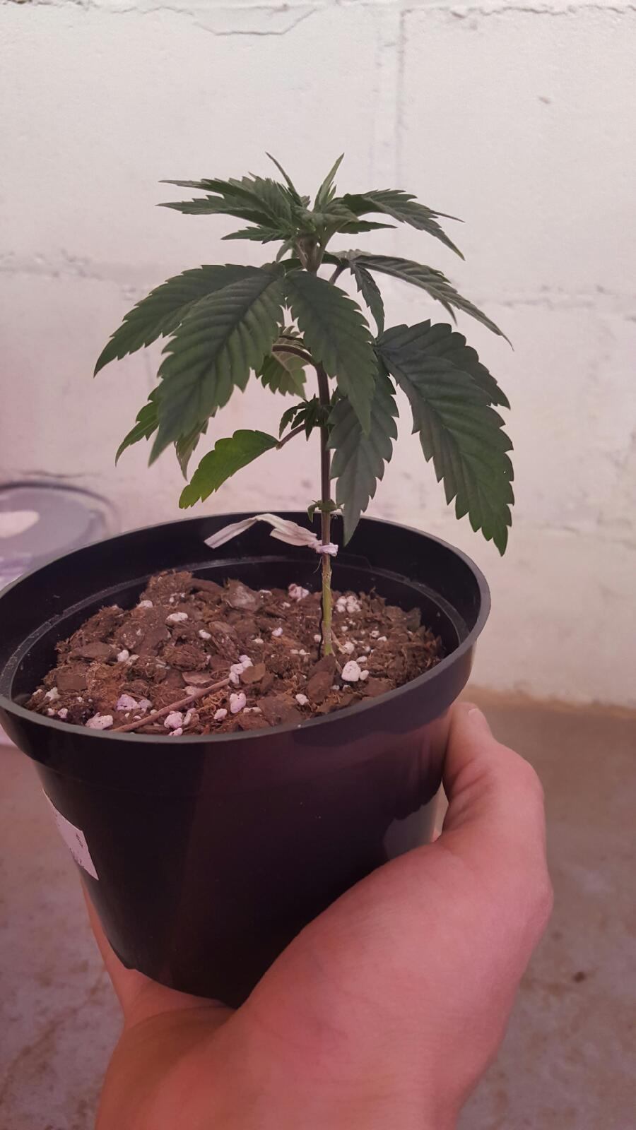 plant 4 all 5 weeks